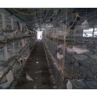 瀚捷镀锌养殖场三层鸽笼