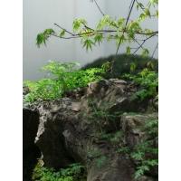 黑山石枯山水景观,上海枯山水金刚石