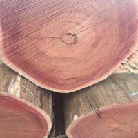 红铁木厂家 定尺加工价格