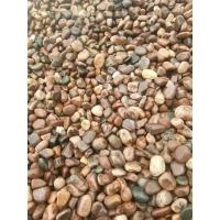 滤水垫层鹅卵石园艺造景鹅卵石变压站鹅卵石铺路鹅卵石