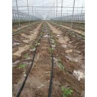 兰考番茄大棚滴灌工程安装材料清单