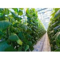 反季節蔬菜大棚種植