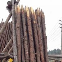 松木桩 桉木/杉木桩 园林建设河堤地基用防腐木柱
