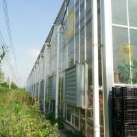 智能玻璃温室大棚建设