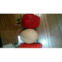 红颜章姬全明星奶油妙香草莓苗价格品种纯