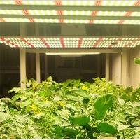 厂家直销大功率植物补光灯实测1000W八爪鱼植物灯可调光植物