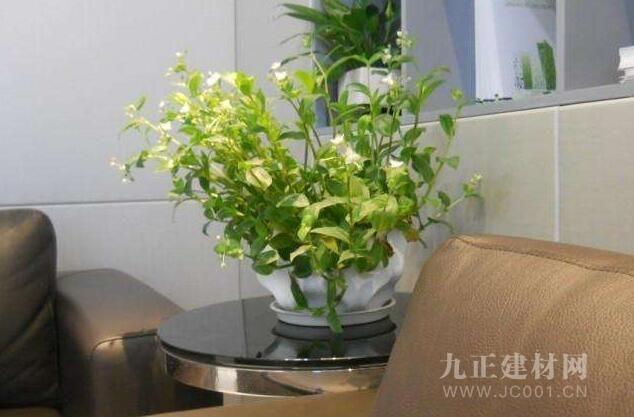 办公台植物