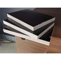 建筑木模板 覆膜模板的价格