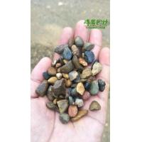 峰景园林供应水磨石子 建筑彩色水磨石砾石