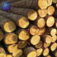 原木樁河道木樁-水利工程打樁木專用原木-松木樁-加工削尖