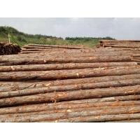 供应6米杉篙 3米竹竿 北京支撑杆