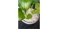 基質育苗用園藝珍珠巖大顆粒