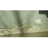 毛坯房内墙水泥标号低墙面掉沙处理用沙无迹抹灰砂浆修复液