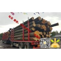 2018年8月尚高木业供应欧洲椴木大径材