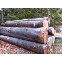 2018年11月法国林场直供榉木原木,旋切级法国榉木