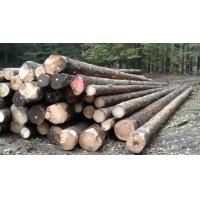 尚高木业2018年11月供应法国云杉原木,可用于建筑、枕木、