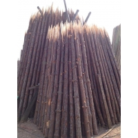 广东佛山松木桩枞桩圆木桩木尖防汛河道软地基建筑打木桩6米大桩
