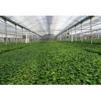 壽光市澤農溫室薄膜連棟智能溫室