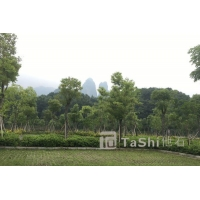植草地坪---硬化與綠化的完美結合