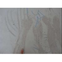 水泥墙面起砂用什么能修复
