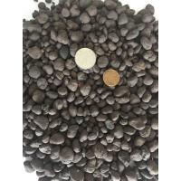 建筑陶粒批发 优质回填陶粒 质优价低