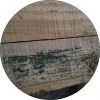 卡松防腐剂 对黑曲霉菌抑制和杀灭有特效